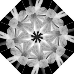 Exotic Black and White Flower 2 Folding Umbrellas
