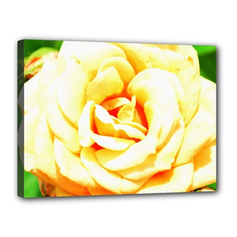 Orange Yellow Rose Canvas 16  X 12