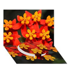 Orange And Red Weed Circle Bottom 3d Greeting Card (7x5)