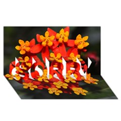 Orange And Red Weed Sorry 3d Greeting Card (8x4)