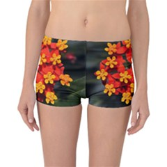 Orange and Red Weed Reversible Boyleg Bikini Bottoms