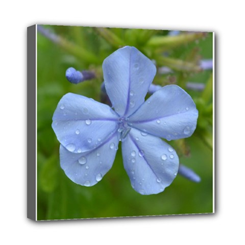 Blue Water Droplets Mini Canvas 8  X 8