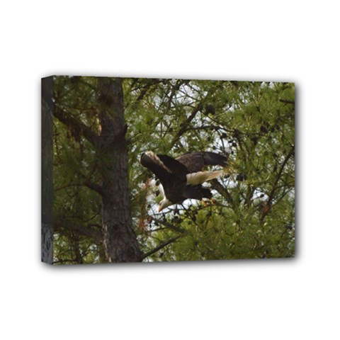 Bald Eagle Mini Canvas 7  x 5