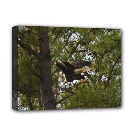Bald Eagle Deluxe Canvas 16  x 12