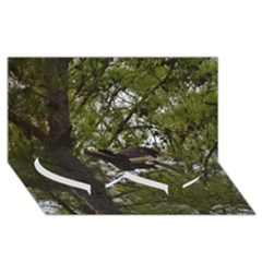 Bald Eagle Twin Heart Bottom 3D Greeting Card (8x4)