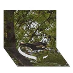 Bald Eagle Circle Bottom 3D Greeting Card (7x5)