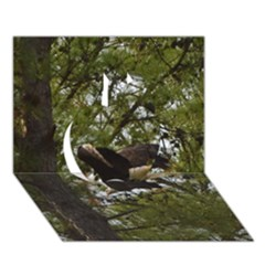 Bald Eagle Apple 3D Greeting Card (7x5)
