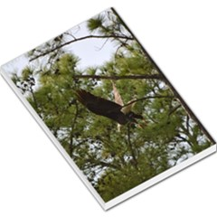 Bald Eagle 2 Large Memo Pads