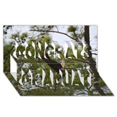 Bald Eagle 2 Congrats Graduate 3D Greeting Card (8x4)