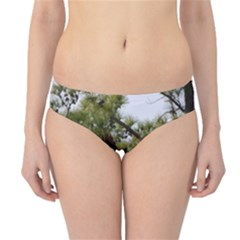 Bald Eagle 2 Hipster Bikini Bottoms