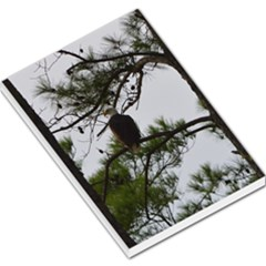 Bald Eagle 3 Large Memo Pads