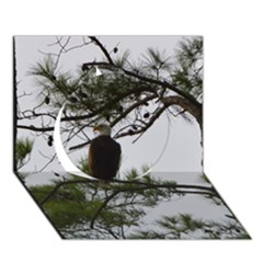 Bald Eagle 3 Circle 3d Greeting Card (7x5)