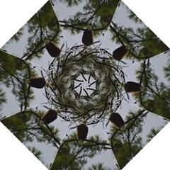 Bald Eagle 4 Folding Umbrellas