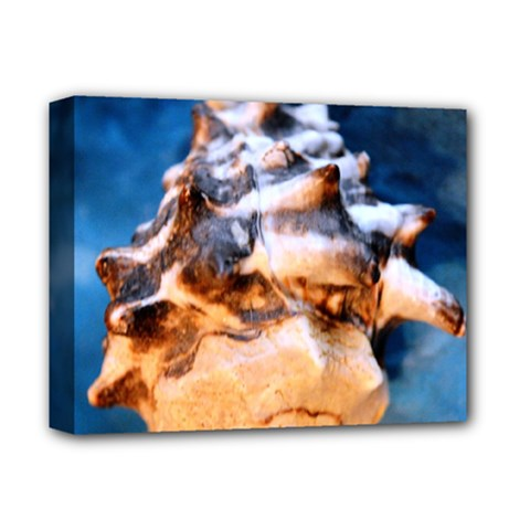 Sea Shell Spiral Deluxe Canvas 14  x 11