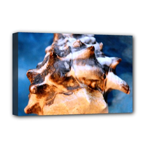 Sea Shell Spiral Deluxe Canvas 18  x 12