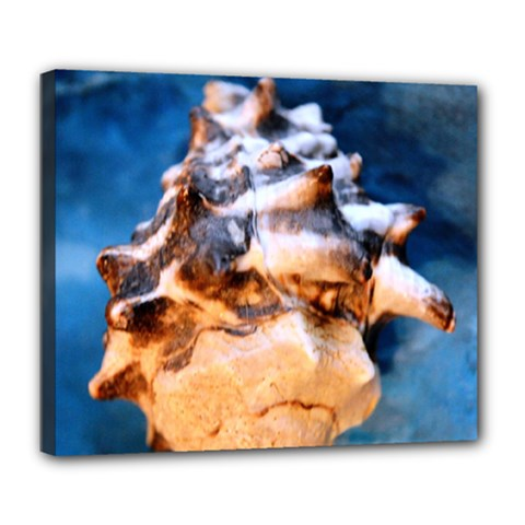 Sea Shell Spiral Deluxe Canvas 24  x 20