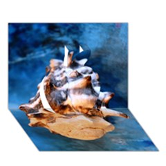 Sea Shell Spiral Apple 3D Greeting Card (7x5)