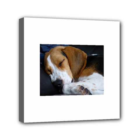 Beagle Sleeping Mini Canvas 6  x 6