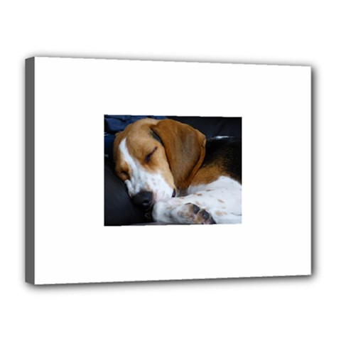 Beagle Sleeping Canvas 16  x 12