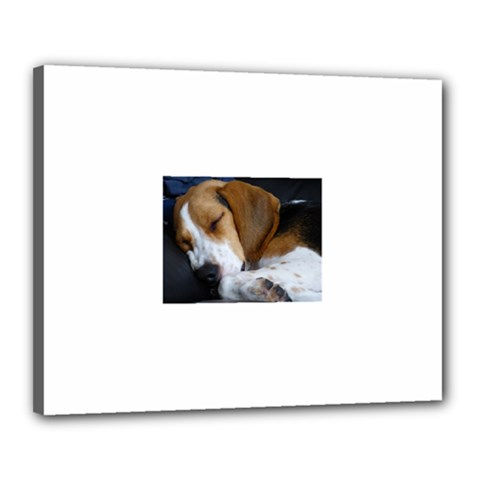 Beagle Sleeping Canvas 20  x 16