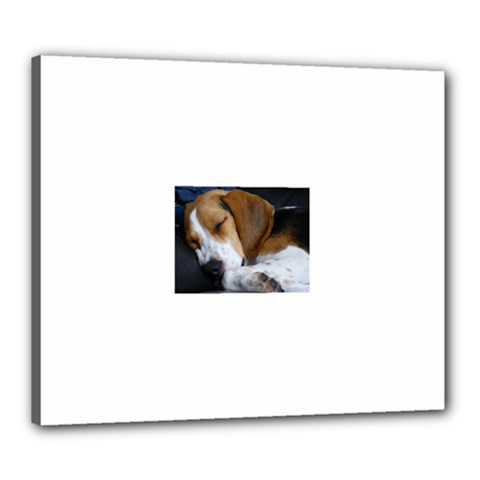Beagle Sleeping Canvas 24  x 20