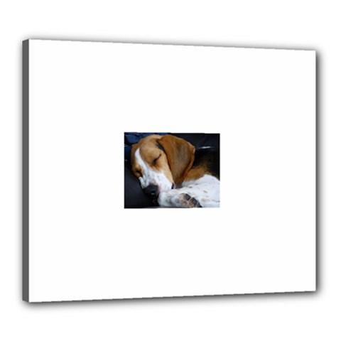 Beagle Sleeping Canvas 24  x 20