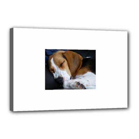 Beagle Sleeping Canvas 18  x 12