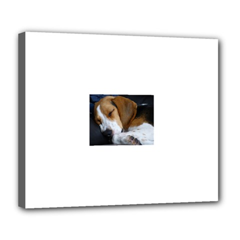 Beagle Sleeping Deluxe Canvas 24  x 20