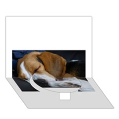 Beagle Sleeping Circle Bottom 3D Greeting Card (7x5)
