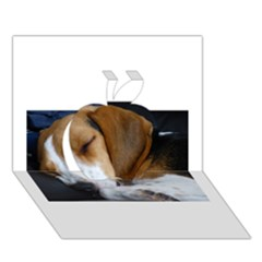 Beagle Sleeping Apple 3D Greeting Card (7x5)