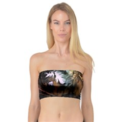 Wonderful Horses In The Universe Women s Bandeau Tops