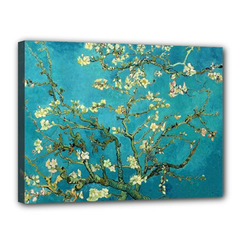 Blossoming Almond Tree Canvas 16  x 12