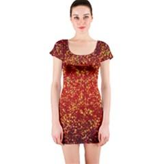 Glitter 3 Short Sleeve Bodycon Dresses
