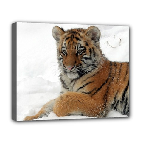 Tiger 2015 0101 Deluxe Canvas 20  x 16