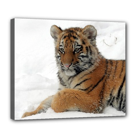 Tiger 2015 0101 Deluxe Canvas 24  X 20