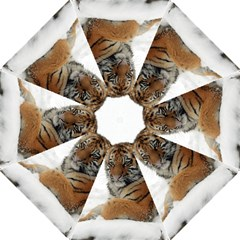 Tiger 2015 0101 Straight Umbrellas