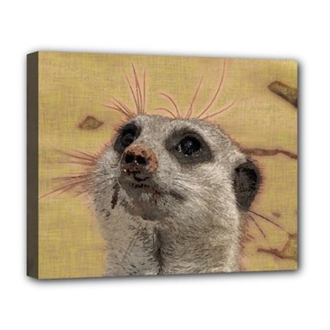 Meerkat 2 Deluxe Canvas 20  x 16