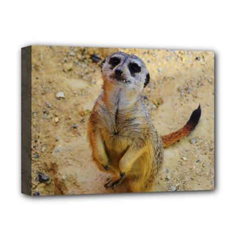 Lovely Meerkat 515p Deluxe Canvas 16  x 12
