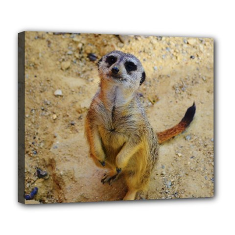 Lovely Meerkat 515p Deluxe Canvas 24  x 20