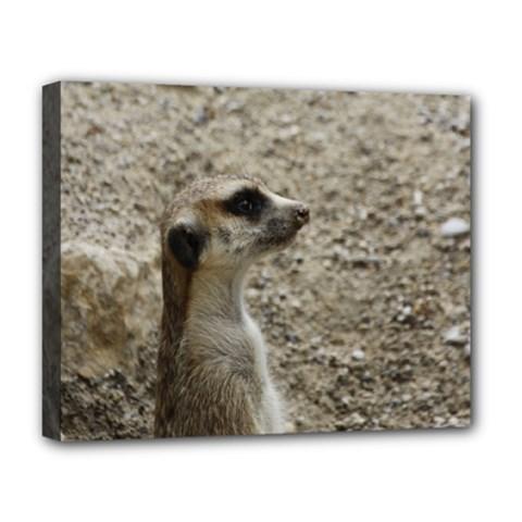 Adorable Meerkat Deluxe Canvas 20  x 16