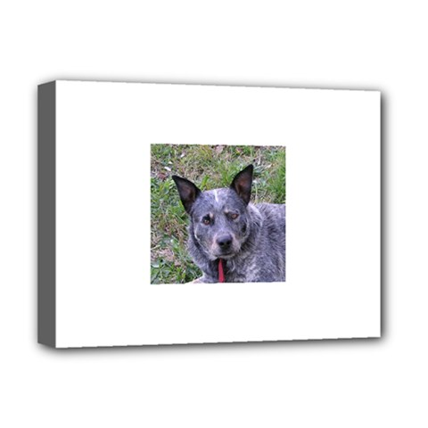Australian Cattle Dog Blue Deluxe Canvas 16  x 12