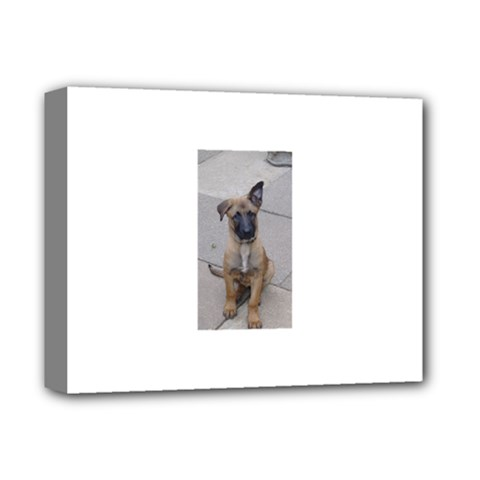 Malinois Puppy Sitting Deluxe Canvas 14  x 11