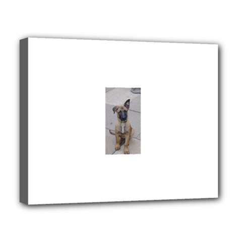 Malinois Puppy Sitting Deluxe Canvas 20  x 16