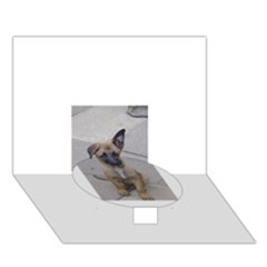 Malinois Puppy Sitting Circle Bottom 3D Greeting Card (7x5)