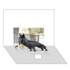 Belgian Shepherd Dog (groenendael) Full Circle Bottom 3D Greeting Card (7x5)