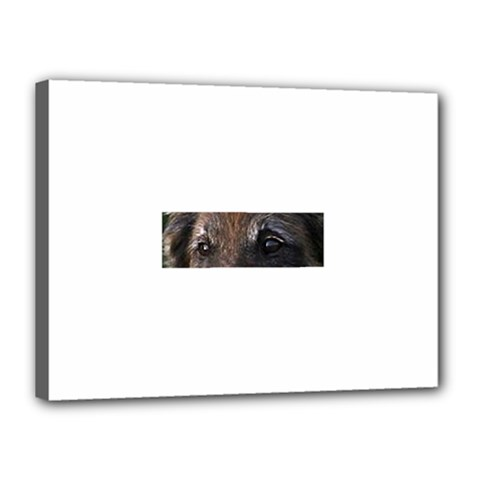 Belgian Tervueren Eyes Canvas 16  x 12