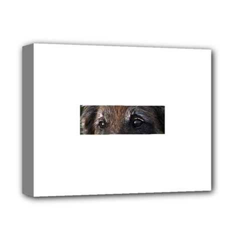Belgian Tervueren Eyes Deluxe Canvas 14  x 11