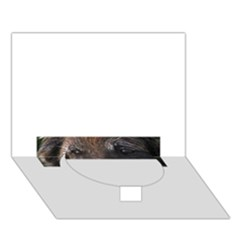 Belgian Tervueren Eyes Circle Bottom 3D Greeting Card (7x5)