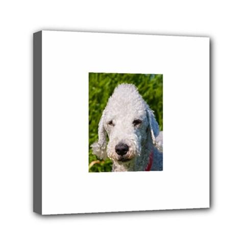 Bedlington Terrier Mini Canvas 6  x 6