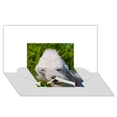 Bedlington Terrier Twin Heart Bottom 3D Greeting Card (8x4)